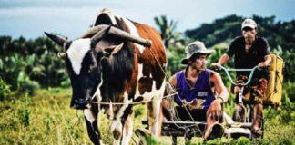 Arbeiten auf den Philippinen