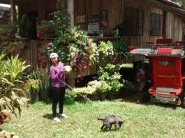 Philippinische frauen, Filipina